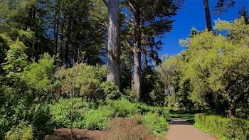 Фото Stanyan Park Hotel у місті Сан-Франциско