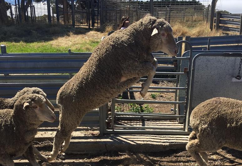 Morella Farm Stay, Cape Jervis, Áreas del establecimiento