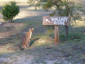 Picture of Wallaby Ridge Retreat in Boyland