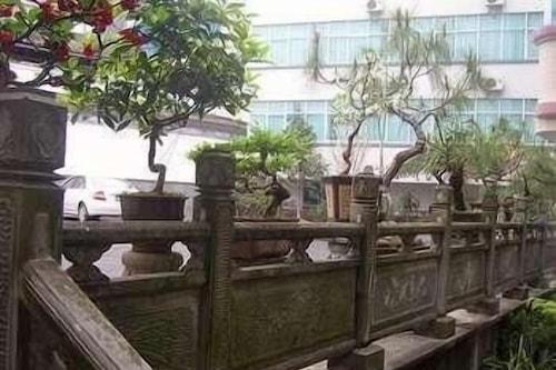 Daxianglong