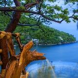 בית על עץ מפואר, מיטת קינג, נוף לאוקינוס, במגדל - נוף לחוף/לאוקיינוס