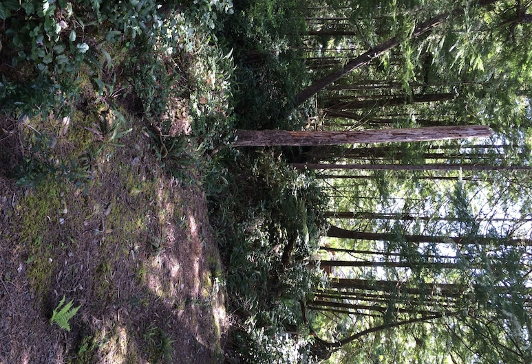 Reef Point Forest Suite, Ucluelet, Property Grounds