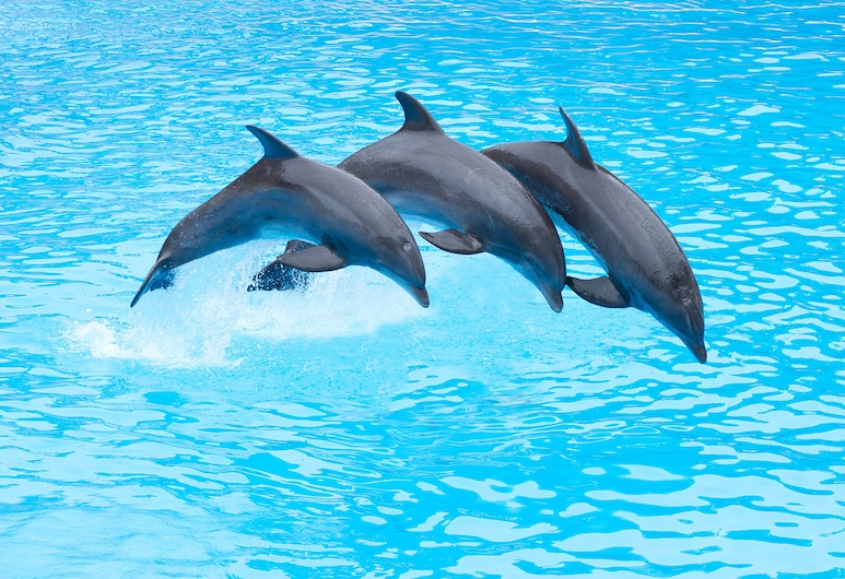 Four Points by Sheraton San Diego - SeaWorld, San Diego, Strand