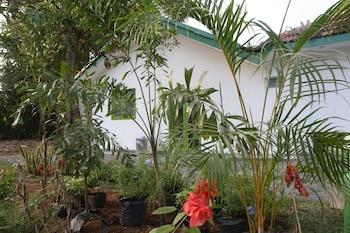 Picture of Green Banana Mirissa in Mirissa