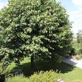Comfort Double Room, Garden View - Garden View