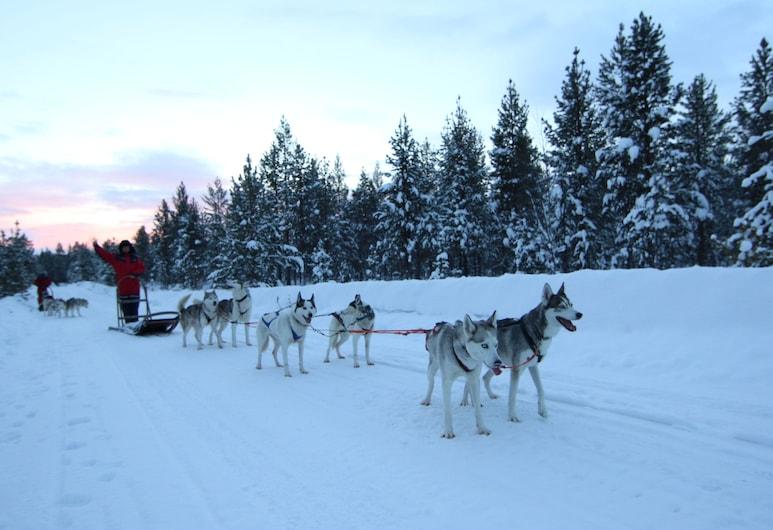 Lake Inari Mobile Cabins, Inari, Snow and Ski Sports