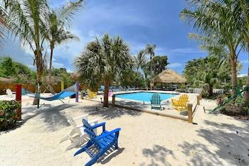 Picture of Siesta Key Palms in Sarasota