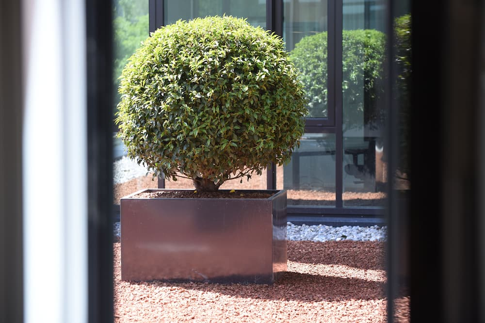 Standardna jednokrevetna soba - Pogled na vrt