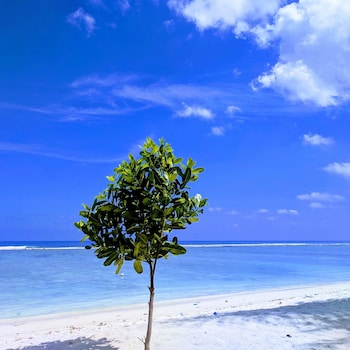 Picture of Noomoo in Hulhumalé