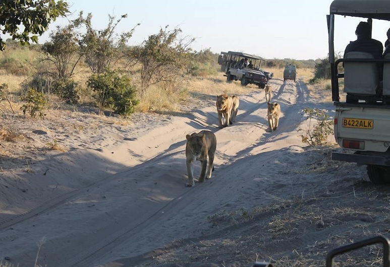 Ihaha Mobile Camp, Chobe National Park