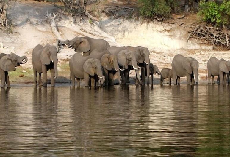 Ihaha Mobile Camp, Chobe National Park, Property Grounds