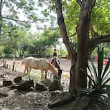 ركوب الخيول
