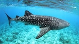 Picture of Whale Shark Inn Maldives in Maamigili