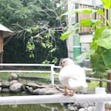 Habitación cuádruple Prestigio, 2 camas Queen size, baño privado, con vista al patio - Vista al patio