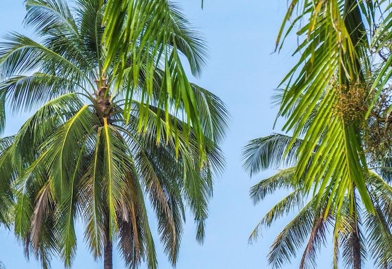 梅那拉北考拉克拉古納酒店, 塔庫巴, 酒店景觀