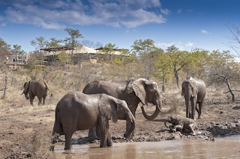 Picture of The Elephant Camp - All Inclusive in Victoria Falls