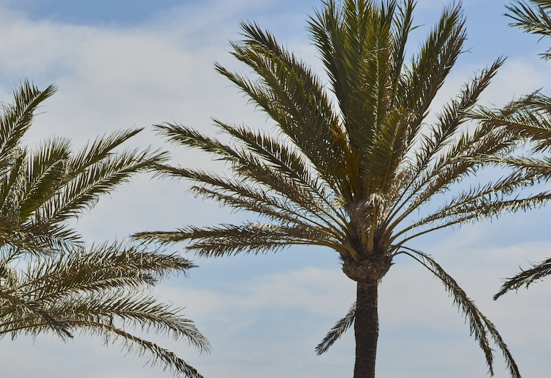Pure Salt Garonda - Adults Only, Playa de Palma, Alberca