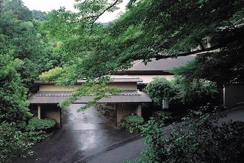 Gambar Tsubaki di Yugawara