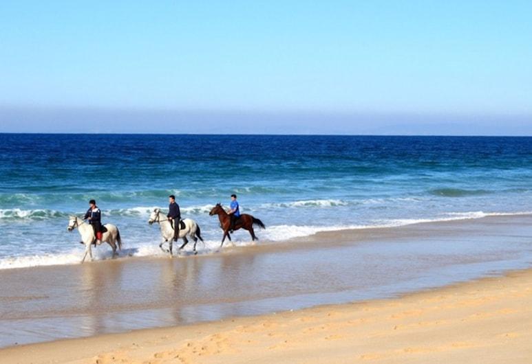 أناستايجيا هوتل ستاليس, Hersonissos, ركوب الخيول
