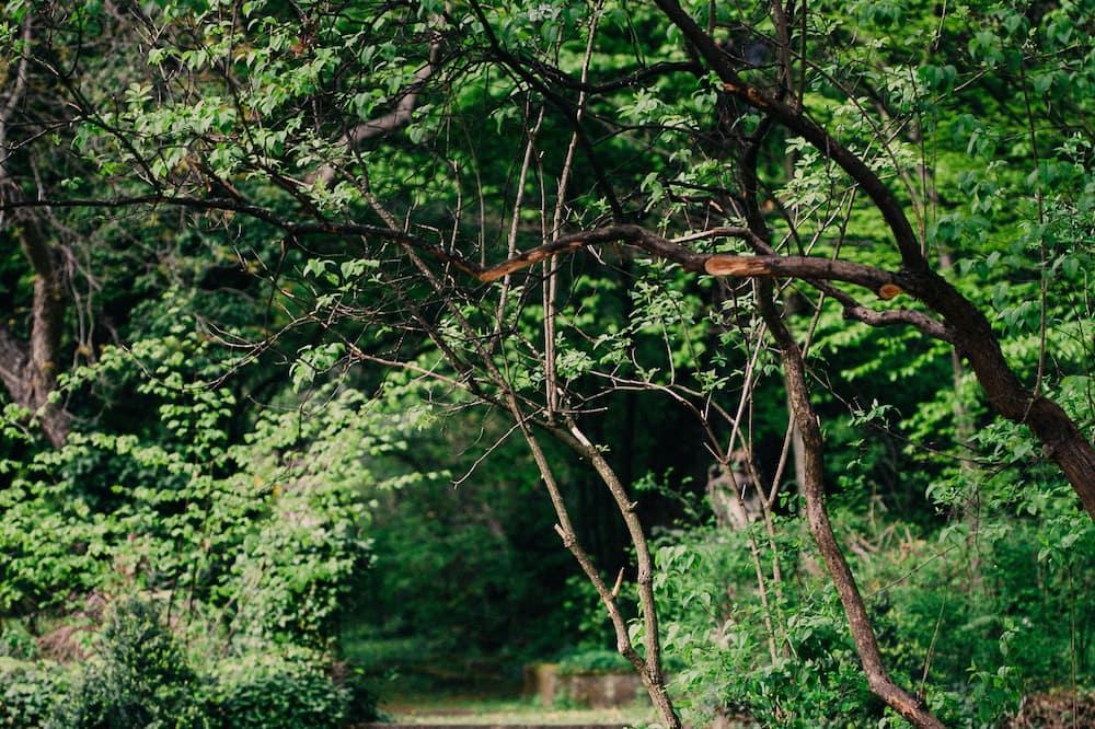 З видом на сад