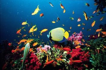 תמונה של ישרוטל ים סוף באילת