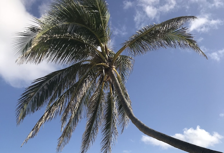 The Palms at Pelican Cove , Christiansted, Beach