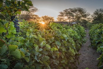 Picture of Neuras Wine & Wildlife Estate in Sesriem
