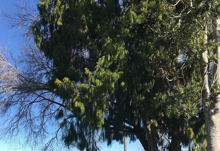 Buckland BnB, Matamata, Property Grounds