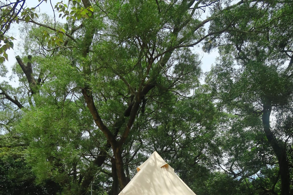 Bell Tent - 5-Person - Guest Room