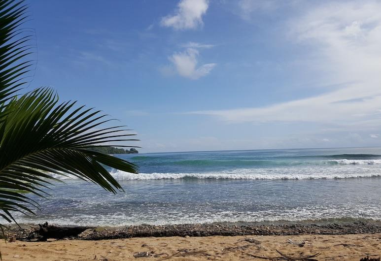 Monkey Tree, Bocas del Toro, Beach