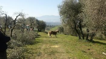 卡帕諾里富比亞諾農場飯店的相片
