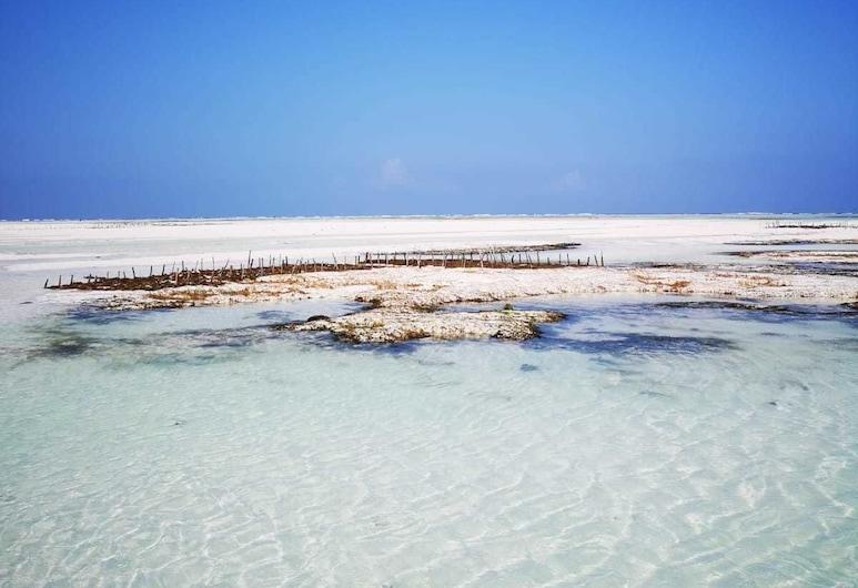 New Jambo Bungalows, Paje, Playa