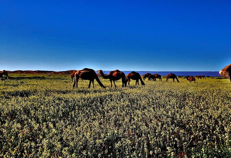 Kasbah Les Alizes Du Desert, M'Hamid El Ghizlane, Vierashuone