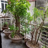Basic Shared Dormitory, Multiple Beds, Non Smoking, City View - Balcony