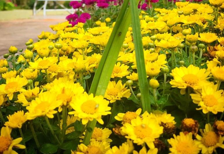 聖羅倫佐修道院旅館, 陝濘跡誠, 花園