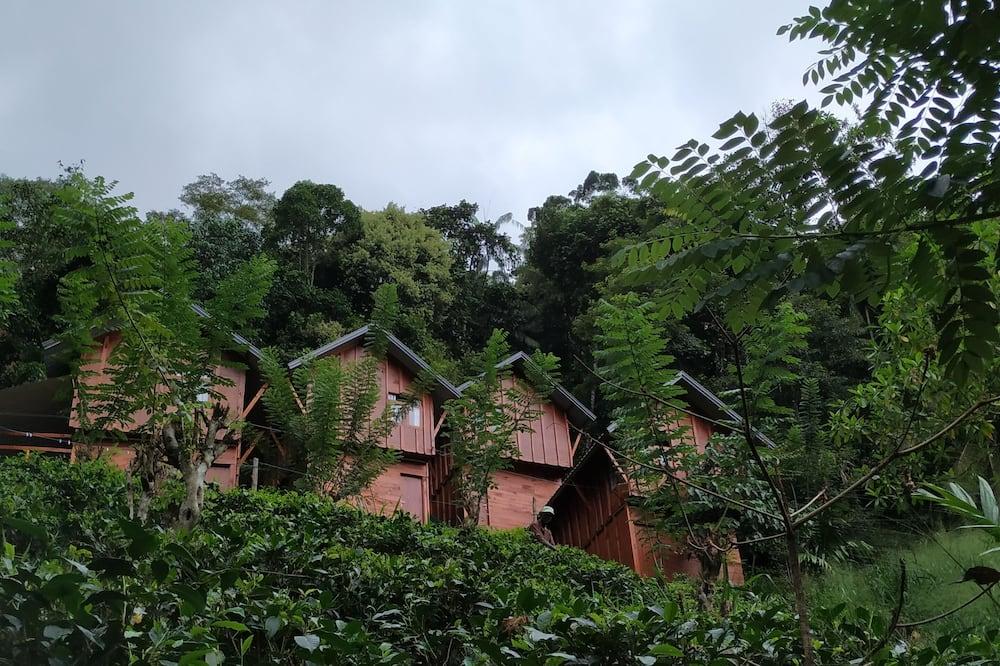 Family Room - Mountain View