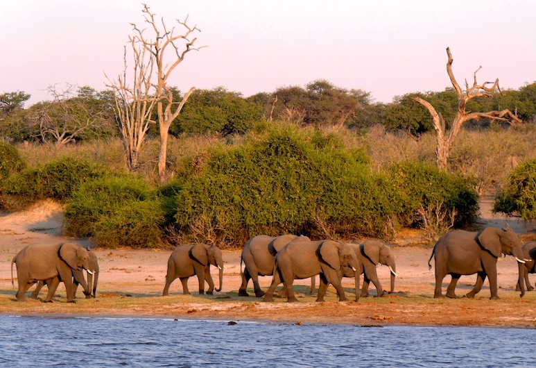 Nxabii Cottages, Kasane, Observação de animais selvagens