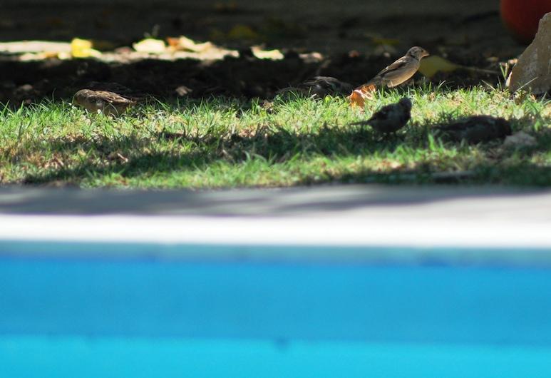 莫爾塞旅館, 庫沙達西, 室外泳池