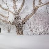 Sukan Salji dan Ski