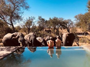 Slika: Honeyguide Tented Safari Camps-Montobeni ‒ Nacionalni park Kruger