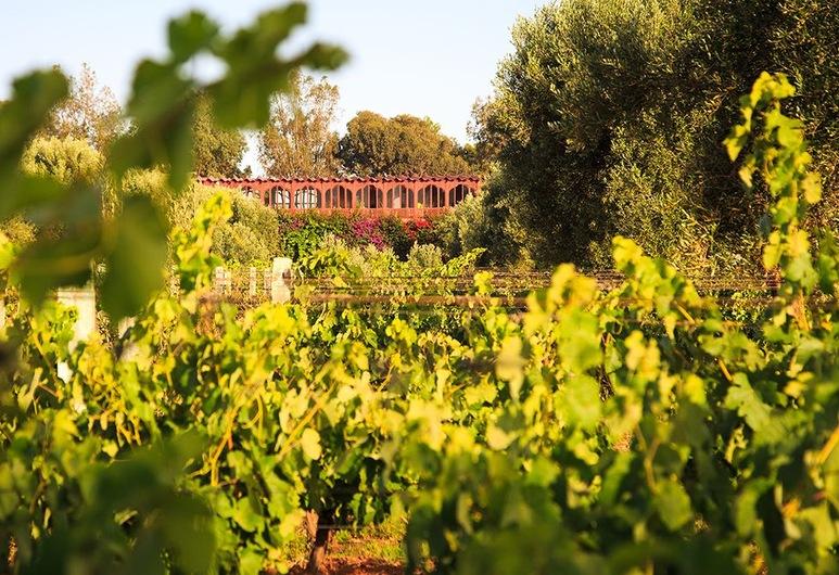 Ryad des Vignes, Ounagha, Dış Mekân
