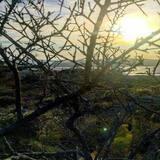 Camera tripla (Oleandri) - Spiaggia