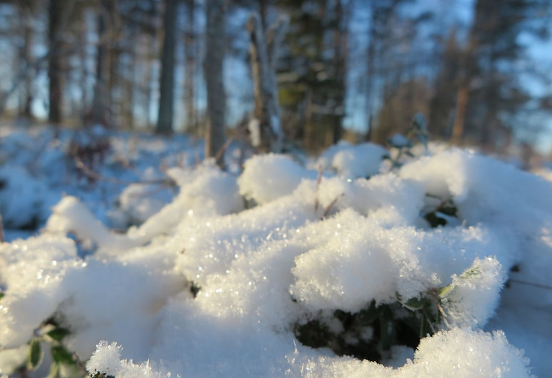 Lapland Getaway, Moskosel