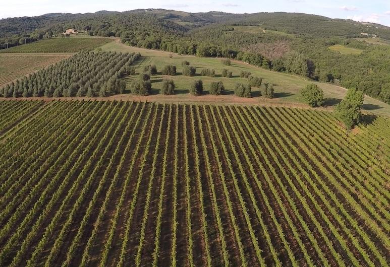 Antica Grancia di Quercecchio, Montalcino, Teren przynależny do obiektu