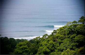Picture of Freedom Jungle in Jaco