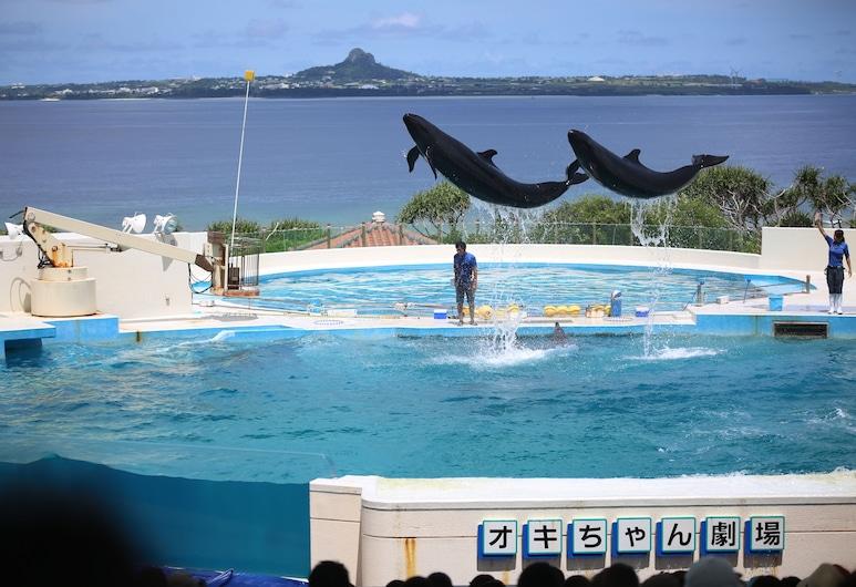 小島沖繩名護酒店, 名護, 遠足