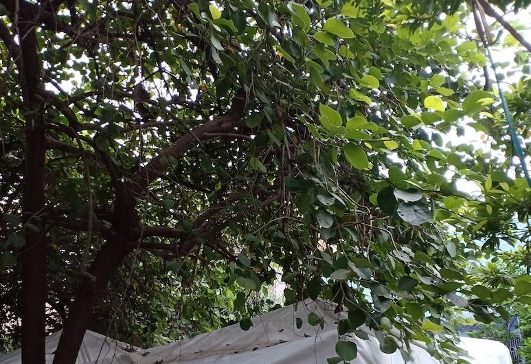 Nature Trail Camps & Homestay, Jodhpur, Terrein van accommodatie