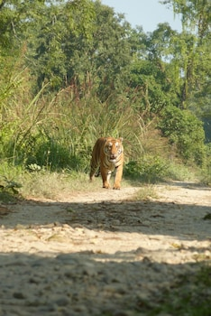 Sauraha — zdjęcie hotelu Kingfisher Jungle Trekking Tour