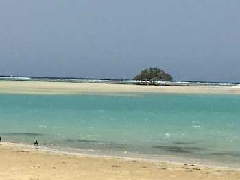 Bild vom Shark paradise-Adults Only in Marsa Alam