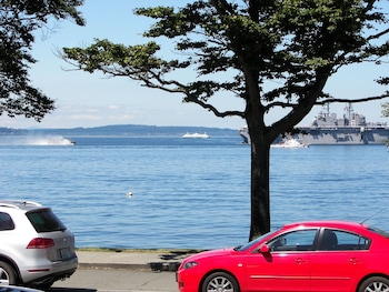 Picture of Magpie on Alki in Seattle